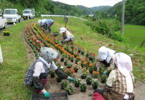 No.37「集落内の女性のほぼ全員が参加する花壇の整備」横沢地区自然を守る会(三戸町)