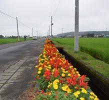 藤島・小山地域保全隊(十和田市)②